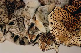 Animal skin products!