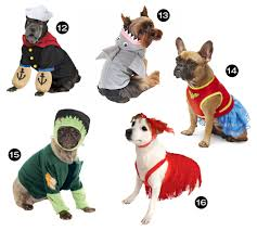 halloween hounds 26 awesome dog costumes for 2015 dog milk