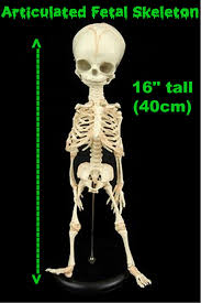 Halloween Skeleton Props by Csi Horror Sign Morgue Mad Scientist Props Halloween Decorations