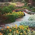 Blog » Paeonia Gardens