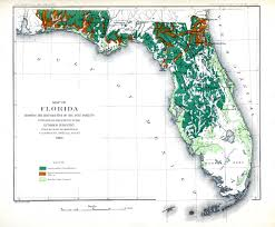 Map Of Florida Cities And Towns by Map Of Florida Showing The Distribution Of The Pine Forests 1881 Ad