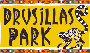 Image result for drusillas