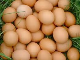 image of fresh chicken eggs, borrowed from t1.gstatic.com