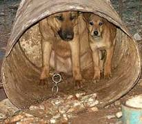 سگ های نگهبان در مرغداری و گاوداری