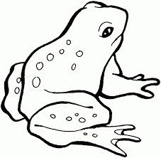 tadpole coloring page frog coloring pages for kids coloring home