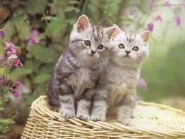 صور قطط تدحك,صور قطط,صور قطط جميلة,صور قطط حلوه Images?q=tbn:ANd9GcQKdsT3aRbb88mpF3EYsmVbEz7C4XzePEDp6VVGvtvd0e752X7N