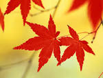 Wallpapers Backgrounds - Red leaves