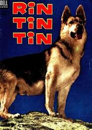 [Cumpleaños] Feliz Cumpleaños Rin Tin tin!! Images?q=tbn:ANd9GcQL80-6gC3y5t0xEwwG1iuchHWz_-mji4s6c93APza0pRRsVHlH