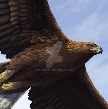 golden eagle detail by pallanoph on deviantart