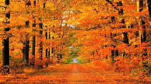 cute fall wallpaper backgrounds fall computer backgrounds wallpaper cave