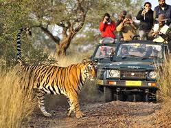 Ranthambore Wildlife Tours Packages From Delhi Hire Car and Driver Service | Ranthambore Wildlife Tiger Safari Tour From Delhi India, Ranthambore Wildlife Tour Packages From Delhi- Wildlife Tour packages -Jim-Corbett Weekend Tour Packages, Corbett wildlife Unique holiday trip, india corbett wildlife tour, Corbett tiger safari tour, india wildlife tour packages, India Tour Package, India Tour From Delhi,Corbett National Park Tour packages,- Jim-Corbett Trip From delhi,wildlife tour india, car Rental Delhi,India Tour Package, India Tour Package From Delhi, Rajasthan Tour Package From Delhi, Taj Mahal Tour From Delhi- wildlife tour,Corbett national park tour india- Corbett wildlife Tour from delhi- JimCorbett National Park tour from delhi-Corbett tour packages- corbett tour from delhi,Delhi Sightseeing Tour, Delhi Same Day Tour, Delhi Rajasthan Tour, Corbett National Park Tour packages india, Carhireindelhi