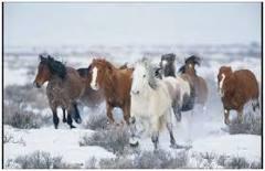 Mis amores los caballos Images?q=tbn:ANd9GcQOndzo4Y-I8aKcpB-CKSBL5s4-QxgaKJQKsGhF5pb4yjsSmzQOEzZh2Ijo