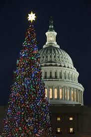 christmas trees slideshow 2 jpg