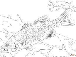 bass fish coloring pages getcoloringpages com