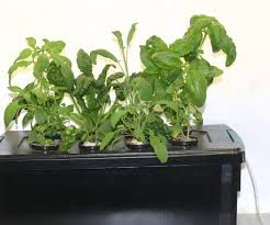hydroponic herb garden hydroponic herb garden systems and super
