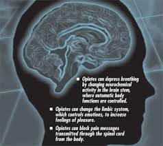 Opiates Act on Many Places in the Brain and Nervous System