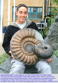 Paracoroniceras lyra, a large ammonite from the Lower Lias found by Ian Troth in Chippel. A fine ammonite specimen has been carefully prepared, ... - 11LYM-Paracoroniceras-lyra-Ian-Troth