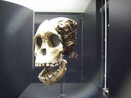 Top    Blogs for Anthropologists    Masters in Teaching Bone GirlKristina Killgrove reports on her research  others      research  and a variety of things she finds interesting  She is also a physical anthropologist