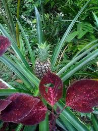 best 25 tropical backyard landscaping ideas on pinterest