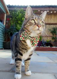 Simons Cat Christmas Tree by Christmas Bow Tie Cat Collars Whitburn Whiskers