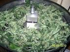automatic marijuana trimmers
