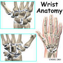 The anatomy of the <b>wrist</b> joint