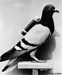 Una paloma mensajera pone en jaque a la inteligencia Britán