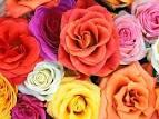 ดอกไม้ประจำวันเกิด | ดอกไม้
