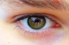 10 Makanan yang Bisa Menyehatkan Mata