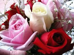 قصة عن المحبة الصآآآآدقة  Images?q=tbn:ANd9GcQWHkk0vfd4wnASCPxNTAQIyL-7bYSCscCMbEfR2Id---L9cspx