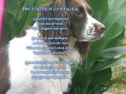 1238 best springer spaniels u0026 doggie quotes images on pinterest