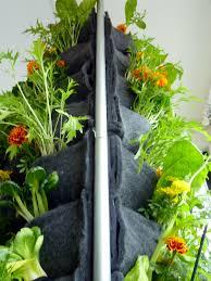 gardening vertical vegetable gardens plants on walls vertical