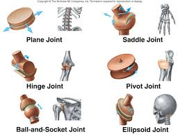 examples of synovial joints types of synovial joints and