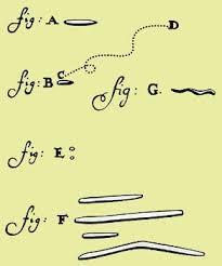 Dibujos de A. Van Leeuwenhoek