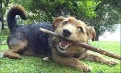 Cachorros são piores que gatos para asmáticos, diz estudo | BBC ...