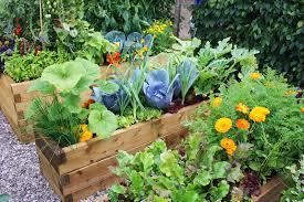 companion vegetable garden layout photo of balcony vegetable garden balcony vegetable garden