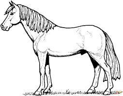 stallion horse coloring page free printable coloring pages