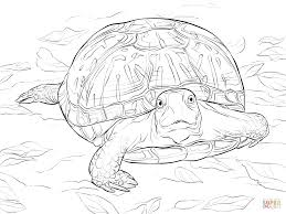 coloring pages of turtles turtle coloring pages to print archives
