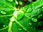 Green Nature Wallpaper - Green Wallpaper (19511380) - Fanpop fanclubs