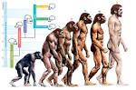 Human body <b>evolution</b>