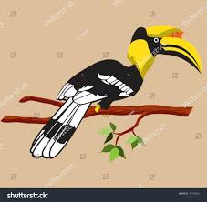 100 hornbill guide yellow billed hornbill stock video