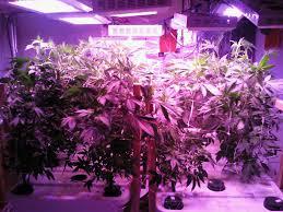 houseplant led grow light hydro blog