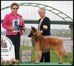 belgian sheepdog national specialty 2018 tracking ch u0027s abtc