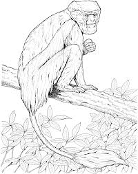 wombat coloring page boy birthday pinterest wombat