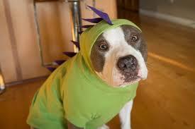 Winnie Pooh Dog Halloween Costume 7 Adorable Diy Dog Costumes Halloween