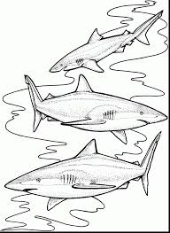 great shark printable coloring pages for kids with shark coloring