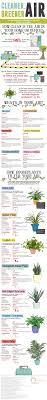 best 25 green plants ideas on pinterest plants cactus best 25 green plants ideas on pinterest plants cactus photography and flora
