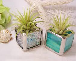 Office Desk Plants by Office Office Desk Plant On Decorative Planters For Fresh Home