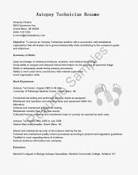 resume format template microsoft word resume template examples in word format best free throughout 85 85 marvellous resume format microsoft word template