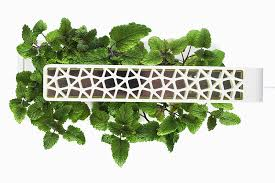 amazon com click u0026 grow indoor smart fresh herb garden kit with